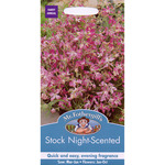 Mr Fothergill's Seeds - Stock Night Scented